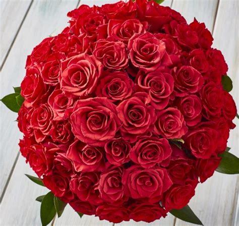 imagenes rosas rojas imagenes de rosas sangrientas rosa spina foto e vettori