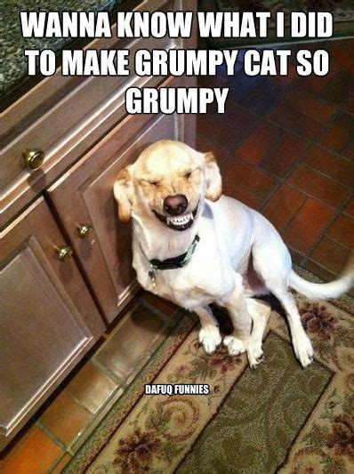 Dog And Cat Memes - grumpy cat dog