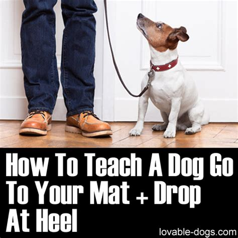 how to teach a puppy to heel lovable dogs how to teach a go to your mat drop at heel lovable dogs