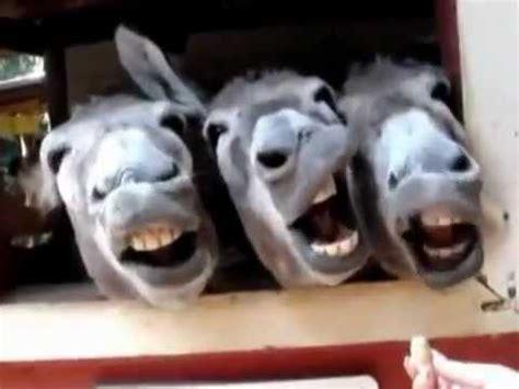 imagenes y videos chistosos animales chistosos youtube