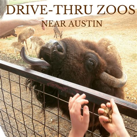 Drive Zoo Near Me | drive thru zoos