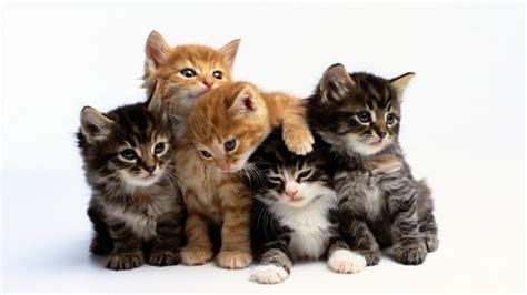 best of cat top 10 cat names in 2017 tips