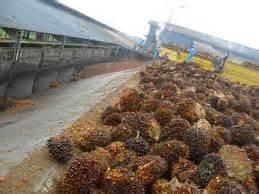 mengenal pabrik kelapa sawit ilmu gratisan by