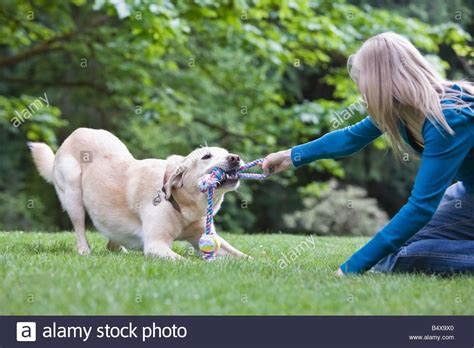 tug of war with puppy tug of war with stock photo royalty free image 20247528 alamy