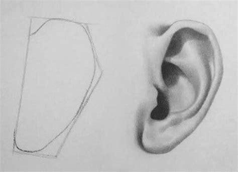 Drawing Ears by 35 Cool But Easy Drawing Tutorials For The Artist In You