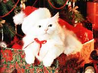 On Christmas A Cute White Cat Is Enjoying The Big Time Wearing