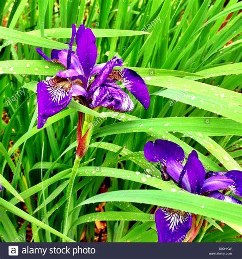 iris stockfotos iris bilder alamy