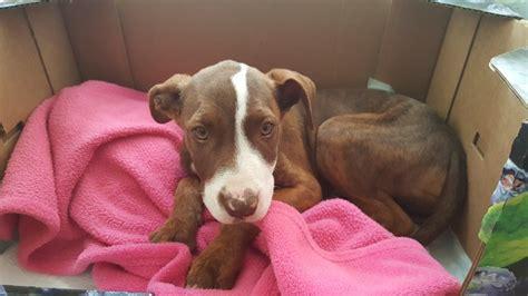 when is my puppy safe from parvo my puppy has parvo babycenter