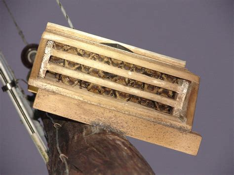 how to make a bat house the benefit of bats in the landscape