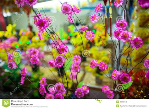 new year flower tradition traditional flowers stock photo image 49992170