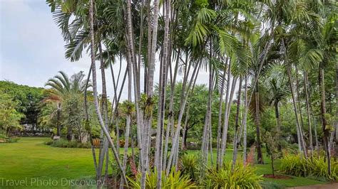 Botanic Garden Miami by Top Things To Do In Miami