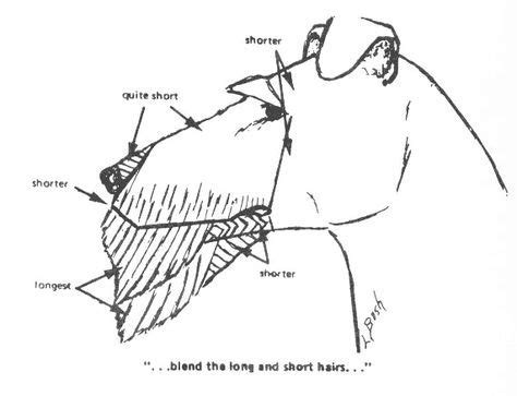 diagram for cutting a westie 22 best airedale terrier grooming images on pinterest