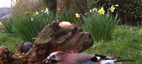 backyard wildlife camera chamfron stud wildlife camera in the garden