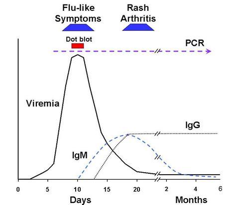 pattern recognition history parvovirus