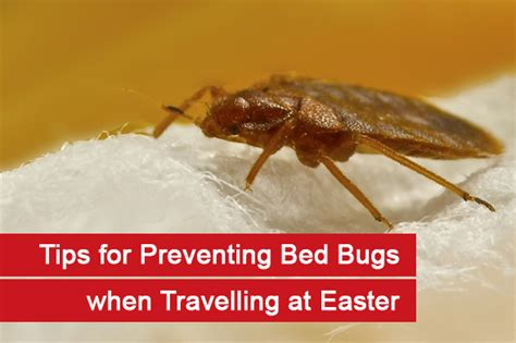 how to prevent bed bugs from spreading bed bug prevention tips for travelling at easter debugged