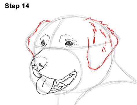 draw golden retriever puppy how to draw a golden retriever