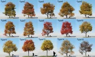 Type Of Trees by Types Of Trees With Pictures Www Pixshark Com Images