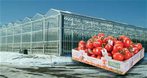 backyard farms maine backyard farms its maine greenhouse 2017 2018 best