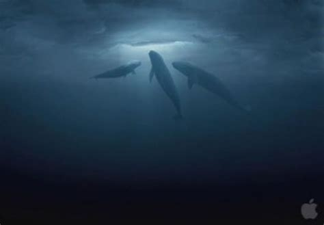 The Miracle Whales Xoxoxo E Big Miracle
