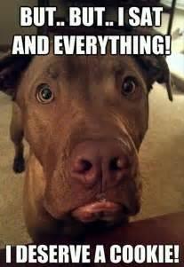 Dog Friendly Upholstery Fabric Funny Dog Memes
