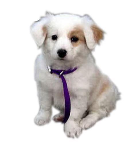 gambar gif kisah si anjing kecil