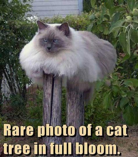 Funny Fat Cat Memes - cat jokes pictures jokes4laugh