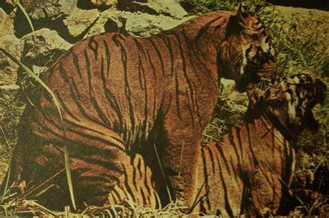 fecondazione interna animali ambiente naturale