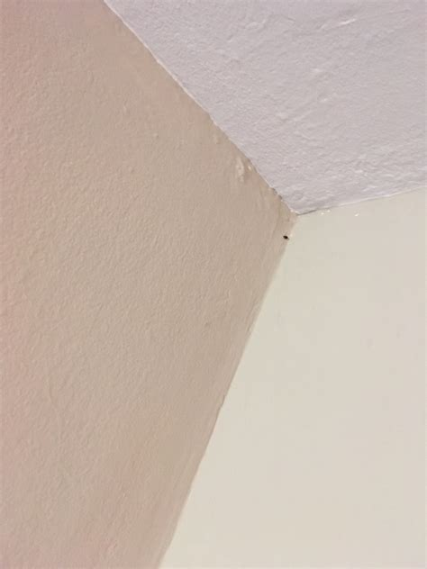 chicago bed bugs chicago bed bugs chicago il bed bug hotel and apartment reports