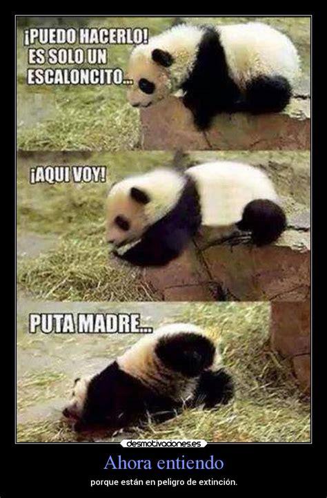Memes De Pandas - im 225 genes y carteles de pandas desmotivaciones