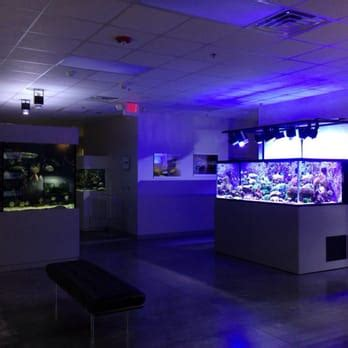 aquarium design ken aquarium design group 22 photos aquarium maintenance
