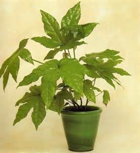 best indoor plants for oxygen what house plants give off oxygen yahoo answers