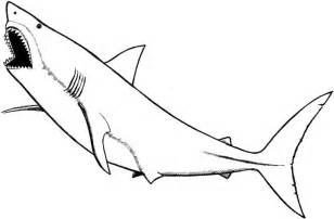 coloring pages sharks free coloring pages of tiger shark