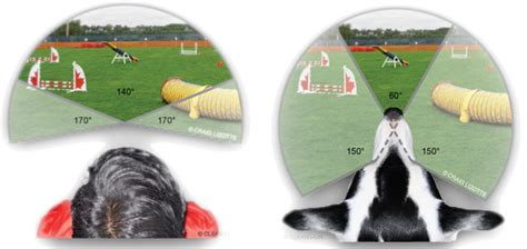 dogs vision what do dogs and cats see veterinary vision