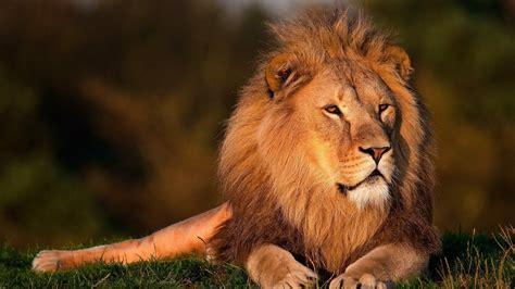 pengertian kingdom animalia lengkap ciri struktur klasifikasi contoh gambar  manfaat