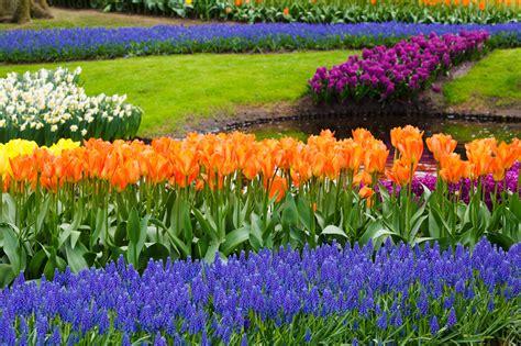 spring gardening spring in garden free stock photo public domain pictures