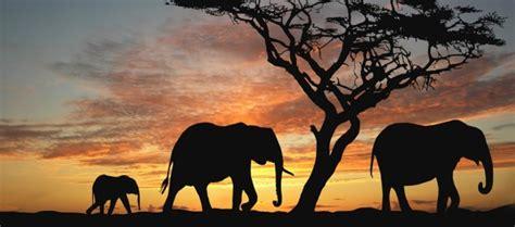 imagenes en 3d de animales salvajes 200 fondos de pantalla de animales salvajes para mac i