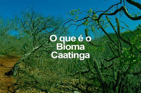 foto design o que é o que 233 o bioma caatinga o eco