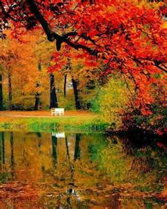 autumn beautiful colors fall forest image 3509269