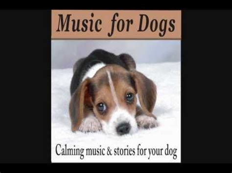 soothing sounds for dogs for dogs calming and stories for your