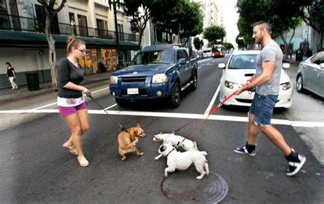 la dogs in downtown los angeles has to the dogs some complain l a now los