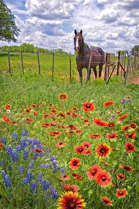 Larissa Flower Big best 25 flowers ideas on horses and pretty horses