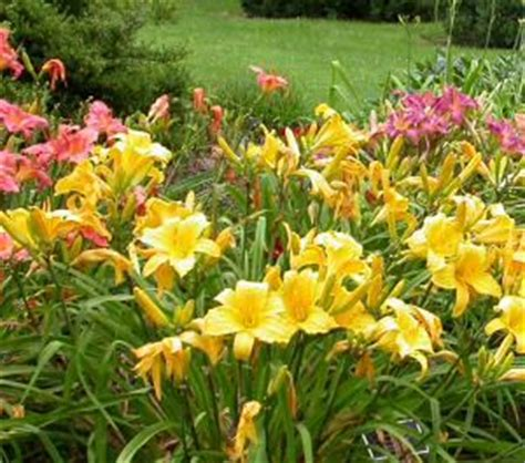 202 best images about garden on pinterest gardens fire pits and day lilies