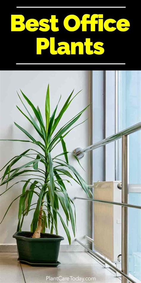 best plants for the office best indoor plants for the office