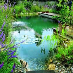 Backyard Bassin How To Build A Natural Swimming Pool Diy