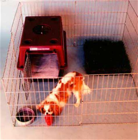 ch 2 raising a puppy