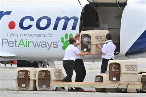 ruff landings welcome pet only airline takes ny