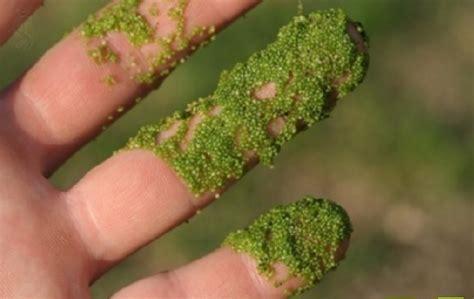 tanaman unik  aneh  dunia