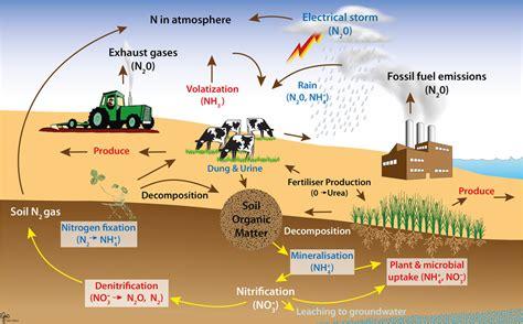 diagram of nitrogen cycle nitrogen cycle diagrams diagram site