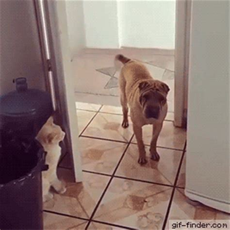 human shoo on dogs best cat gifs of the week 7 we cats and kittens