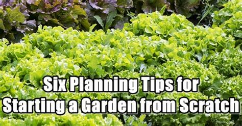 six planning tips for starting a garden from scratch the